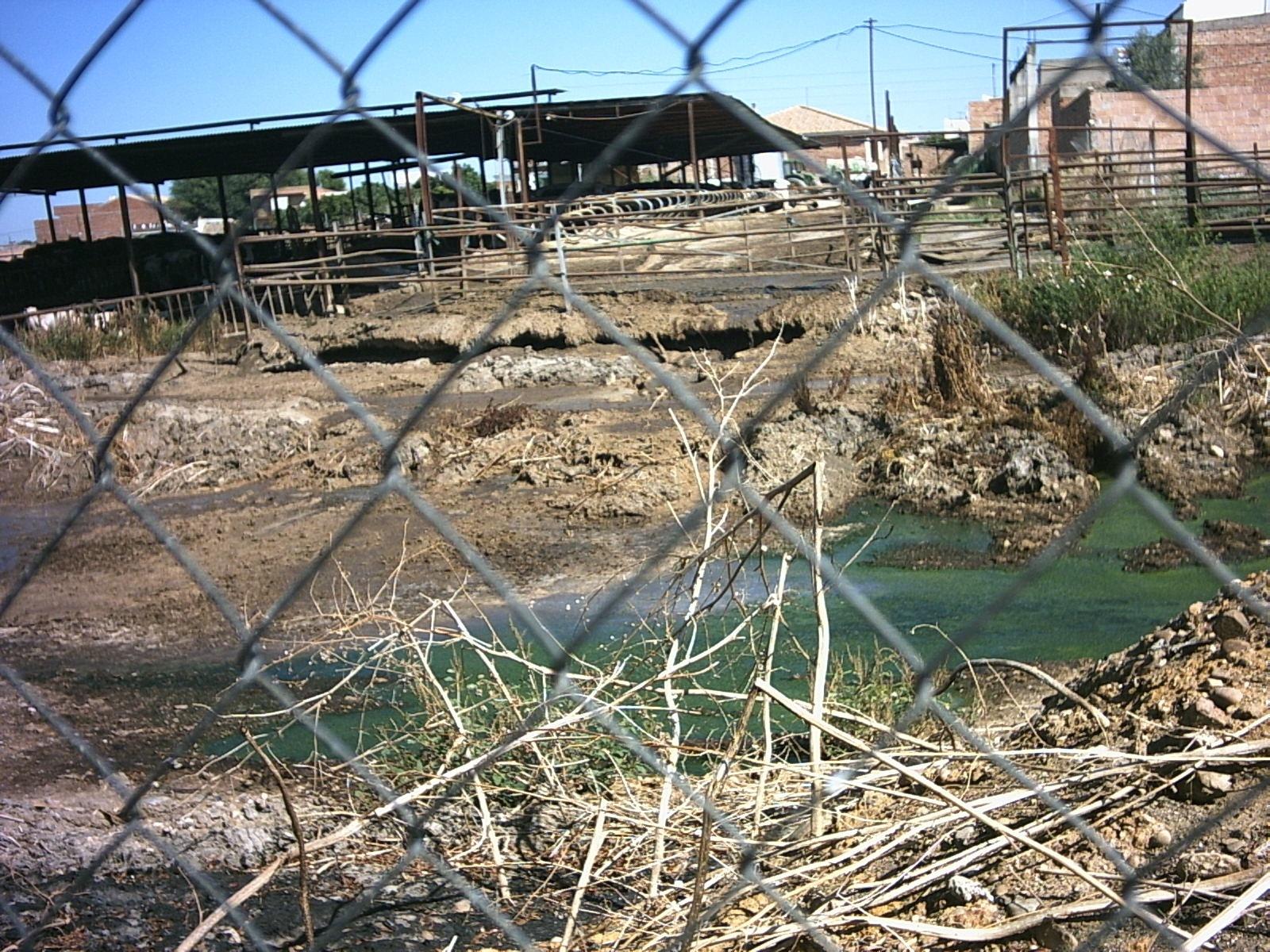 El afectado por la vaquería ilegal de Fuente Palmera confía en el «desmantelamiento» tras una condena al dueño
