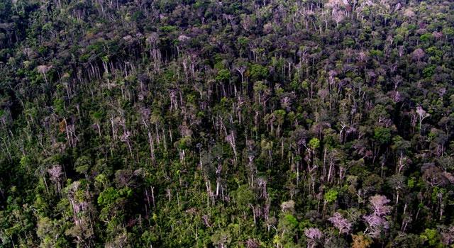 El 80% de las zonas de los Andes con especies endémicas, están desprotegidas