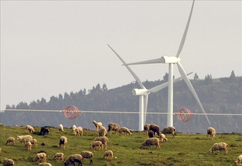 El BOE publica la supresión de las primas a las nuevas plantas de energía renovable
