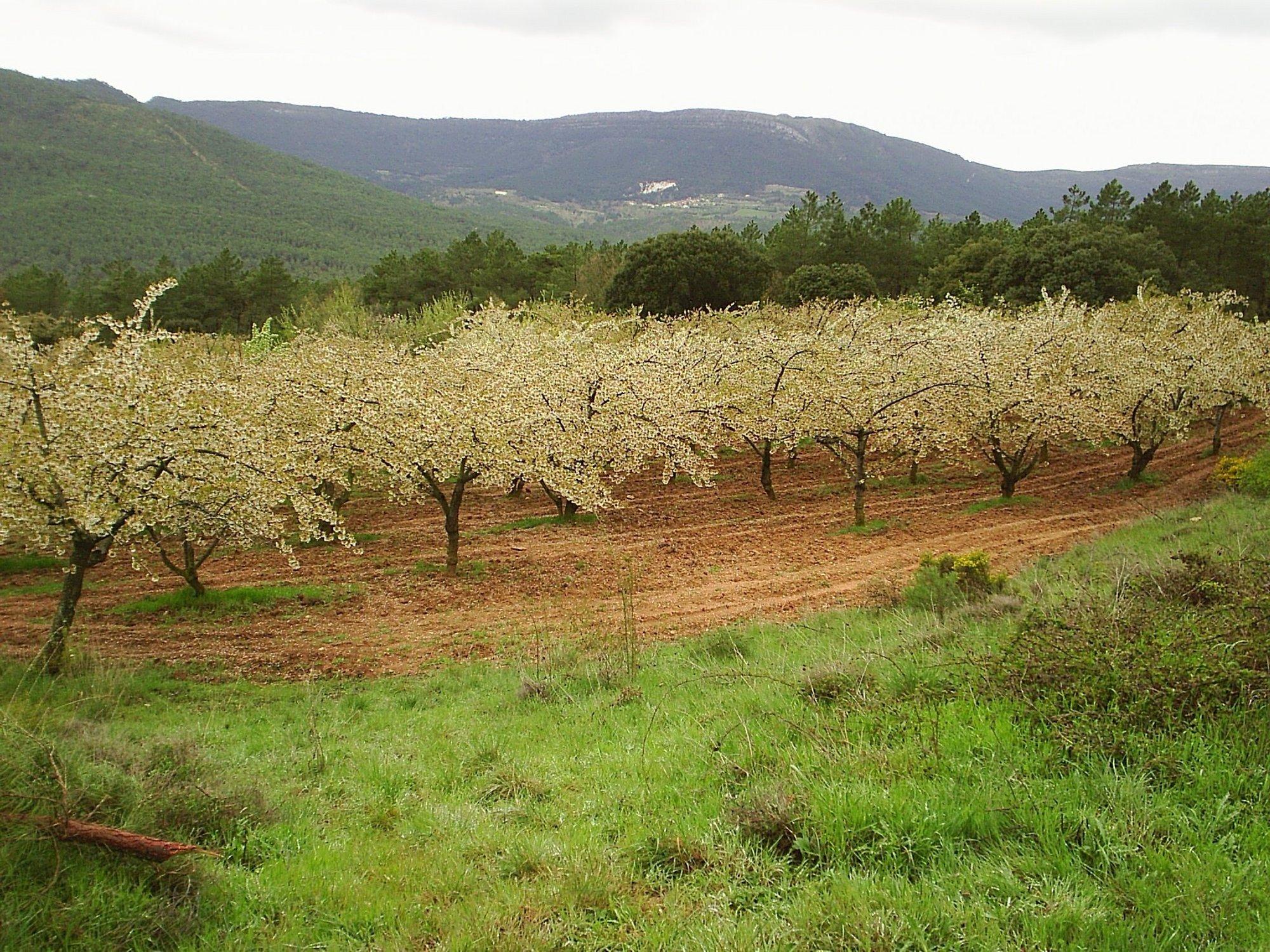 Fruticultores de las Caderechas (Burgos) inician contactos para agrupar parcelas y adquirir terrenos abandonados