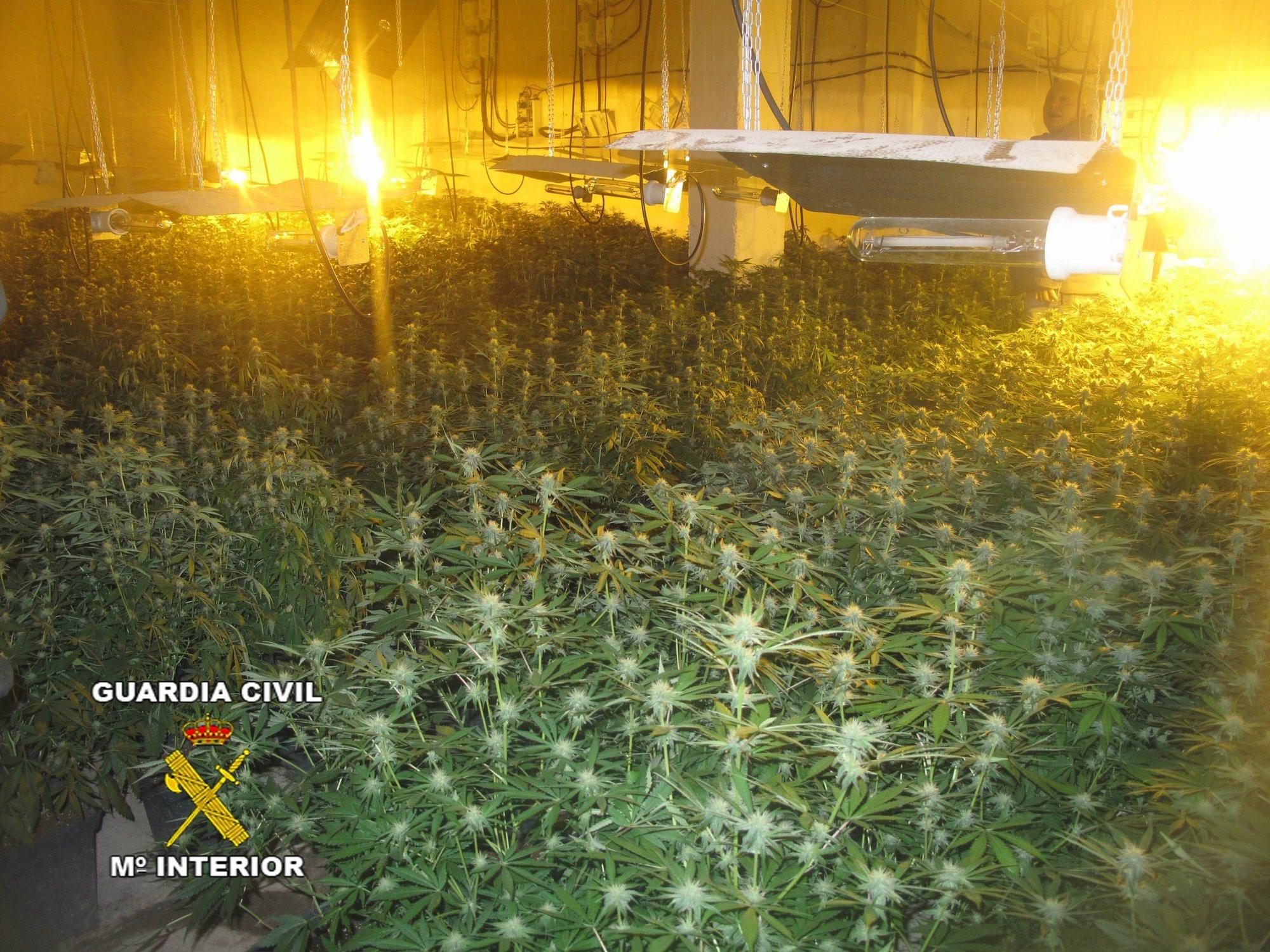 Desmantelado un invernadero de marihuana con 1.546 plantas en Pinos Puentes (Granada), con tres detenidos