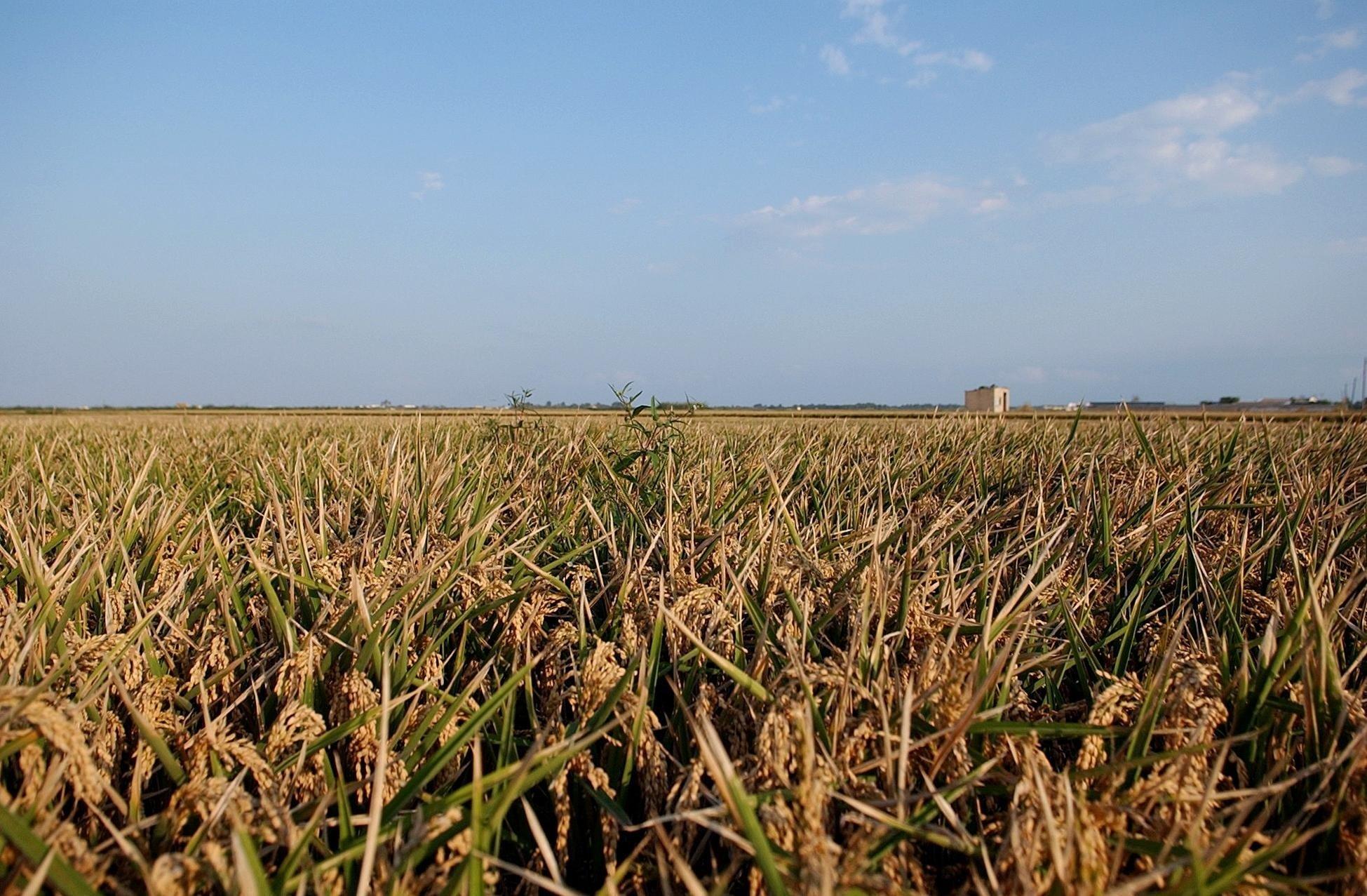 Unió de Pagesos considera insuficiente la línea de préstamos de 30 millones