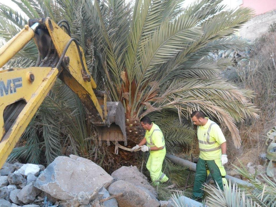 El Ayuntamiento de Adeje (Tenerife) acomete un plan de limpieza para embellecer las zonas verdes del municipio