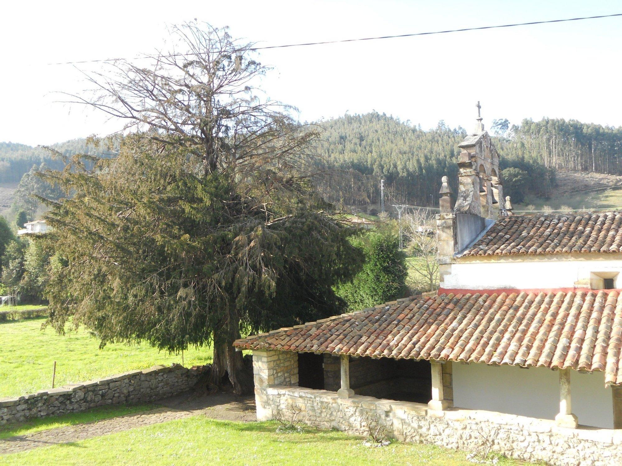 El Principado protegerá doce lugares históricos vinculados con tejos