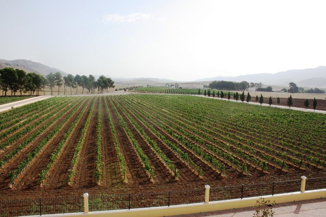La Cofradía del Reino de la Monastrell distingue 21 vinos elaborados con esta variedad de uva