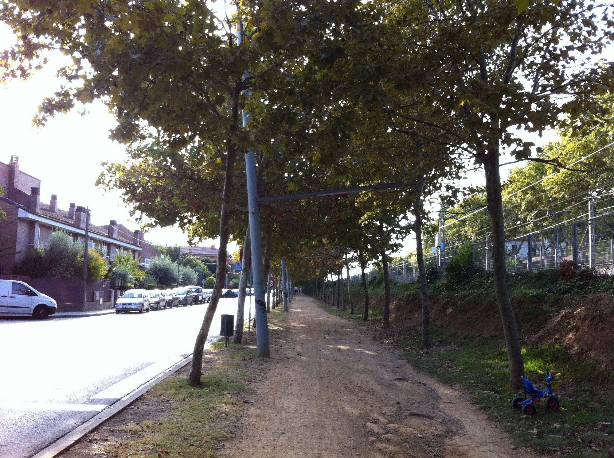 El Ayuntamiento repondrá más de 300 árboles en las calles de la ciudad