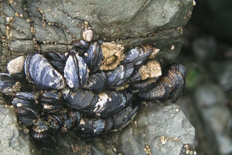 El Gobierno prohíbe la extracción de moluscos bivalvos en las bahías de Santander y Santoña y ría y canal de Boo