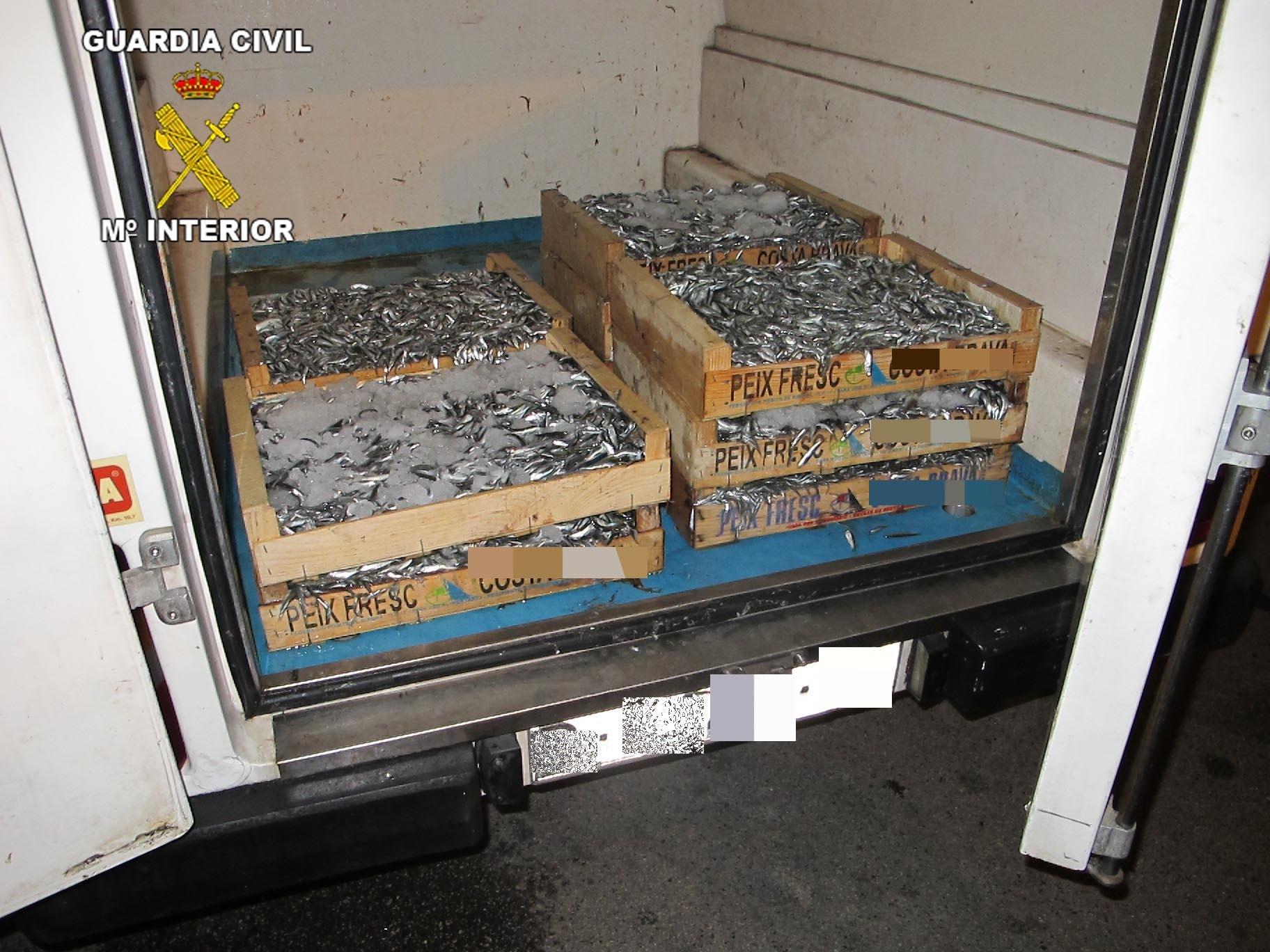 Incautan más de 150 kilos de pescado de talla irregular en Barcelona