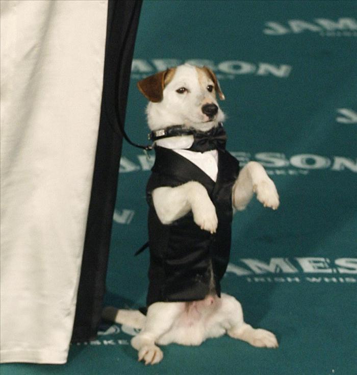 «Pancho» se pasa al cine y será el primer perro español en protagonizar una película