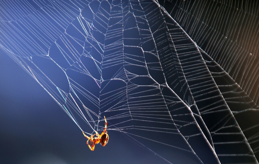 La viuda negra y la araña marrón son menos peligrosas que la americana