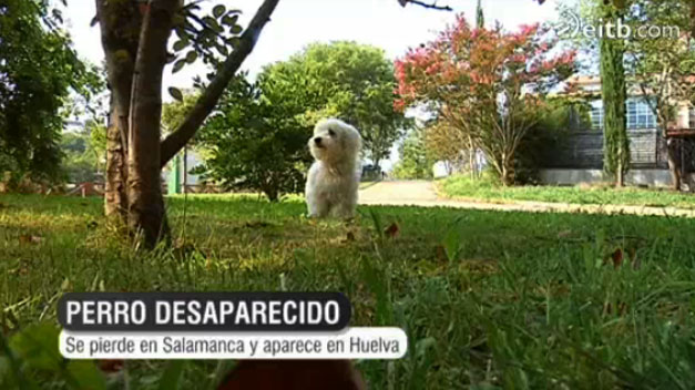 Una familia de Guipúzcoa halla a su perro en Huelva, tras perderlo en Salamanca
