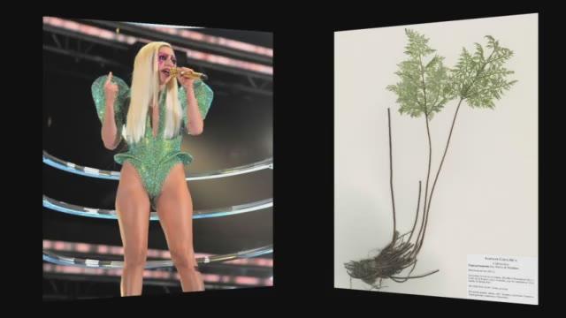 Bautizan una especie de helecho hallada en Costa Rica con el nombre de Lady Gaga