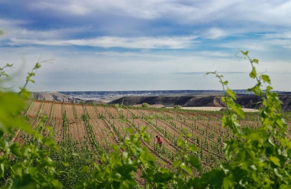 El CITA y la empresa Grandes Vinos y Viñedos ensayan un nuevo procedimiento para ahorrar agua de riego