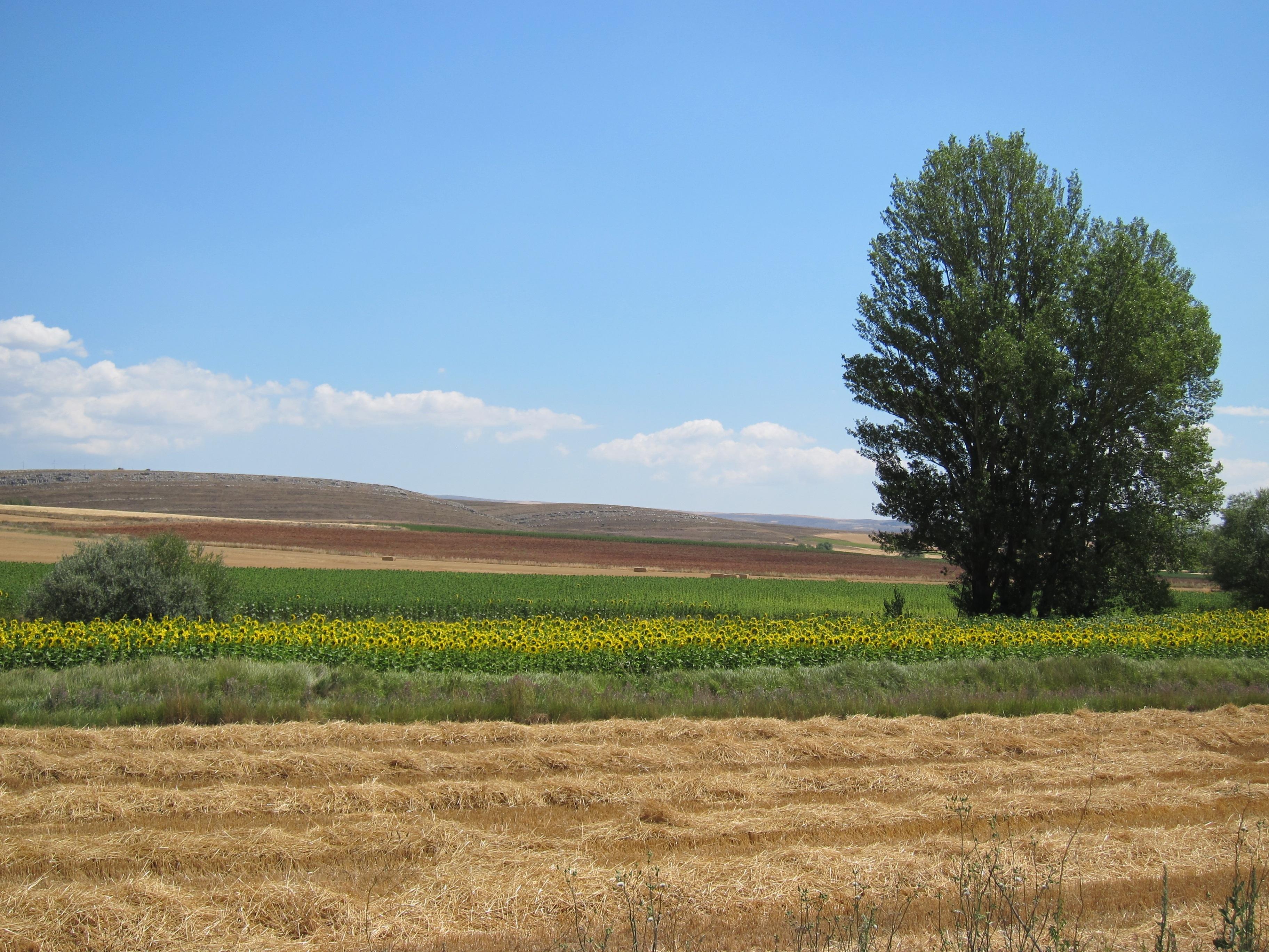Unió de Pagesos pide al Govern mejorar la renta agraria tras caer un 43% desde 2001