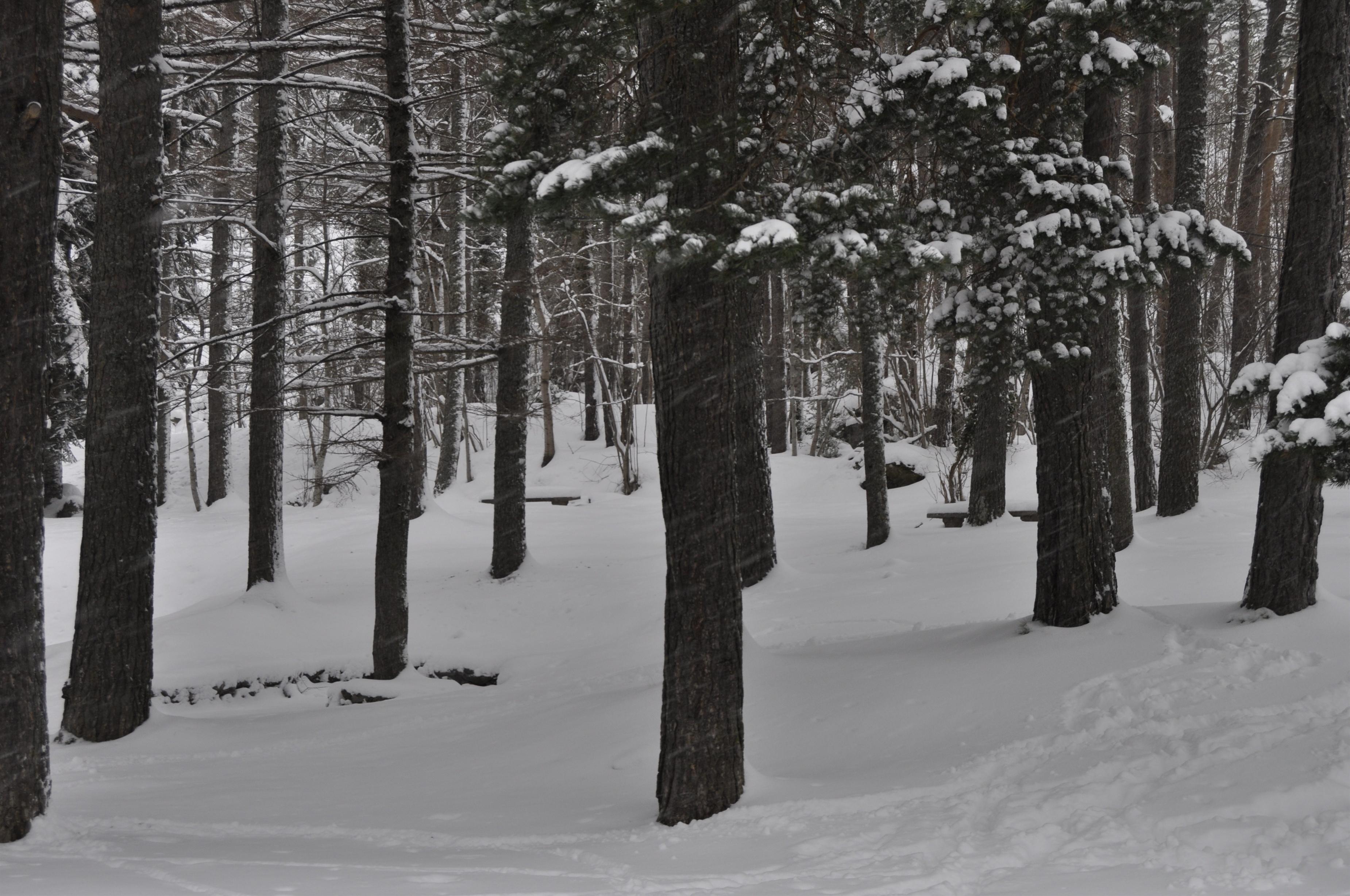 Alerta naranja por nevadas, vientos, aludes y deshielos