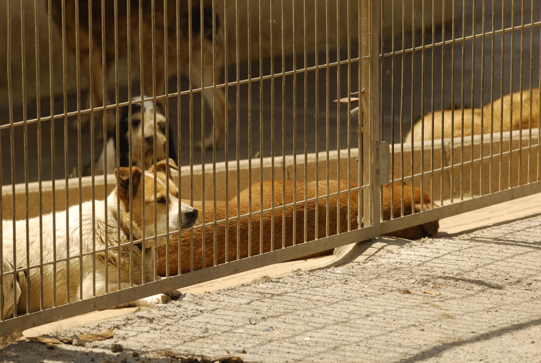 El Tribunal Administrativo Central de Recursos Contractuales paraliza la licitación de la perrera provincial de Cuenca