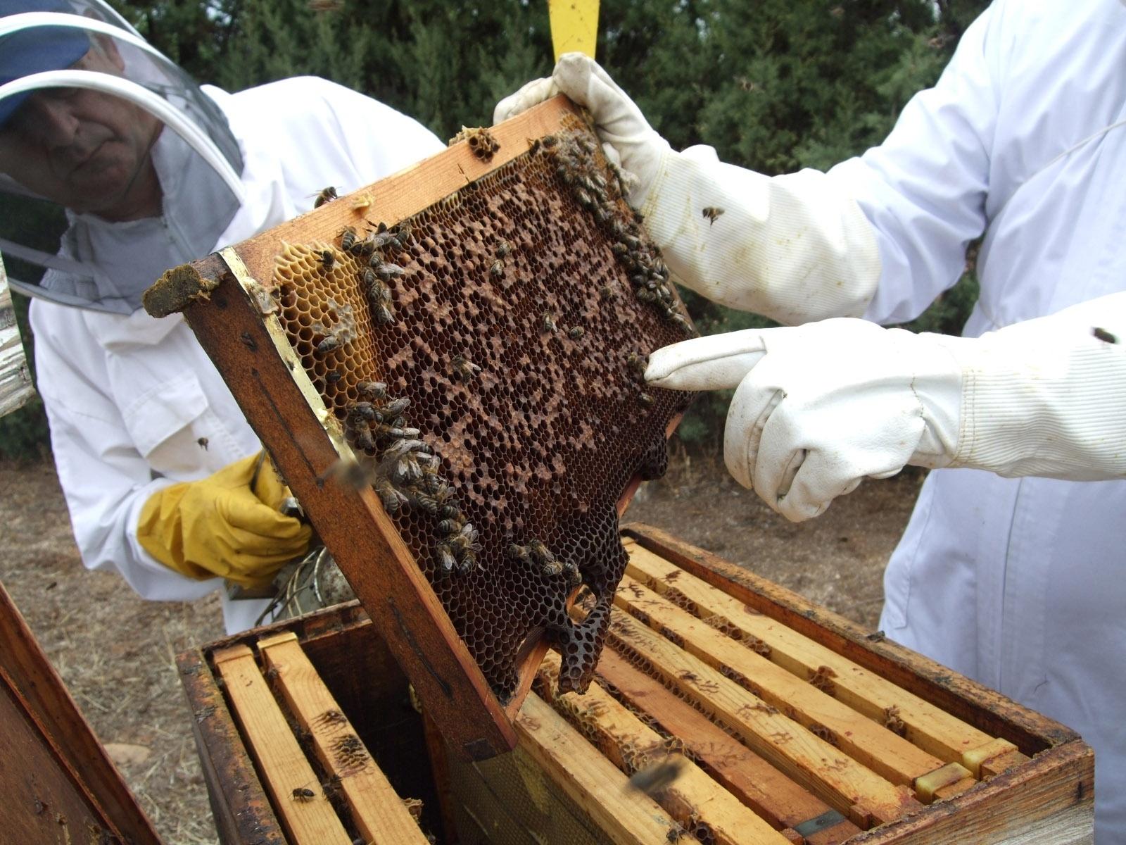 La cosecha de miel de La Alcarria de 2012 ha sido la más baja de la última década