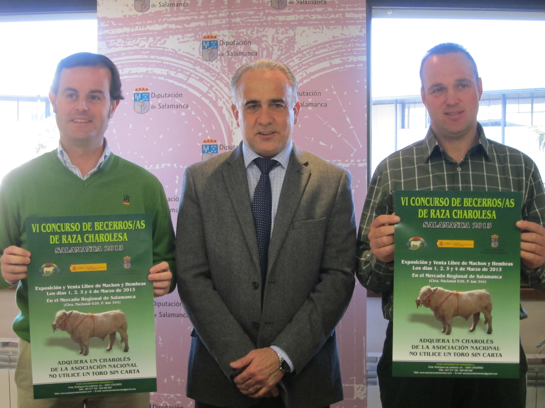 Ejemplares de Extremadura participan en Salamanca en el Concurso de Becerros de Raza Charolesa