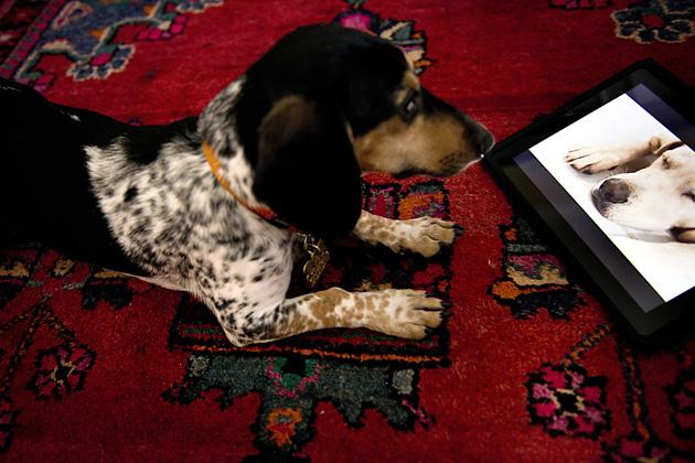 Dog tv, el primer canal para que tu perro no se aburra solo en casa