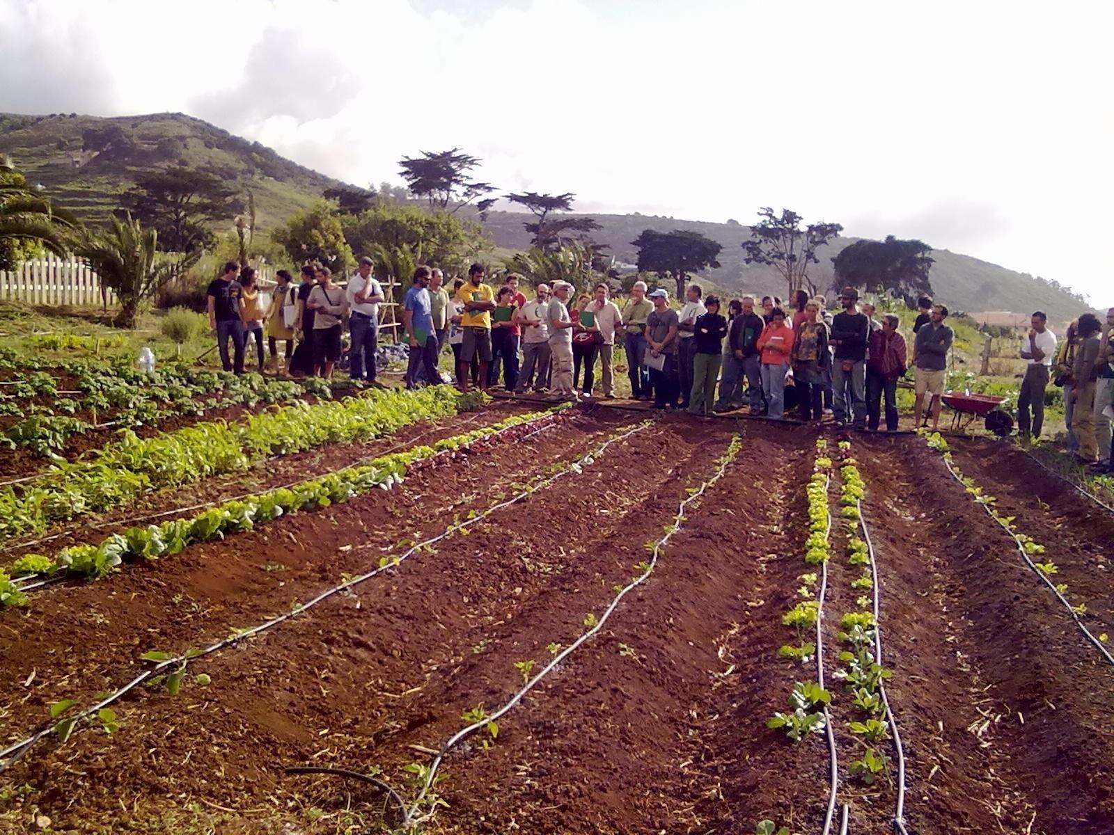 Tegueste (Tenerife) acoge la puesta en marcha de un programa para dinamizar el sector agrario