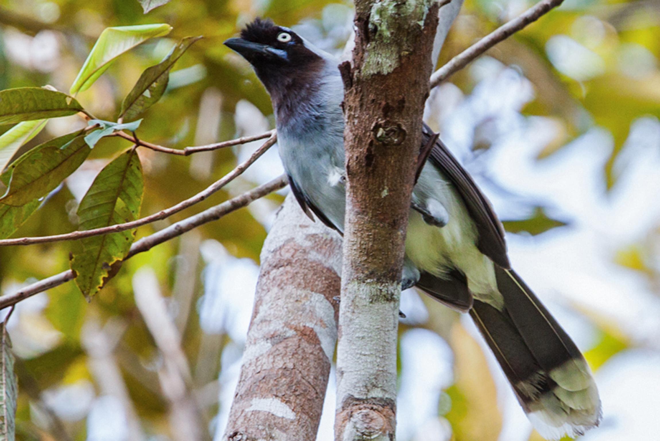 Encuentran en Brasill 15 nuevas especies de aves nunca vistas hasta ahora