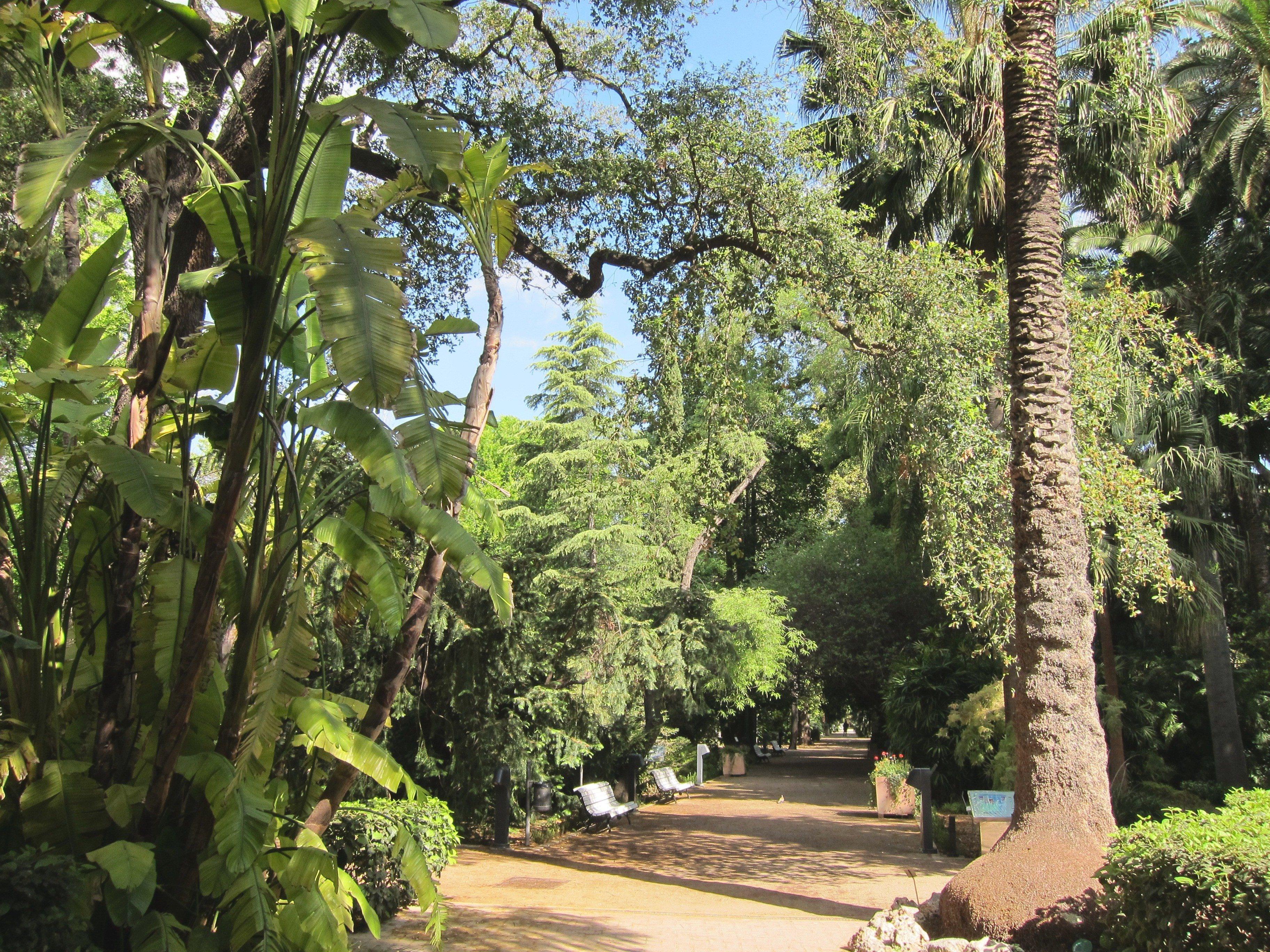 El Jardín Botánico inicia su recorrido por »Las edades del jazz» con dos conciertos para los más pequeños