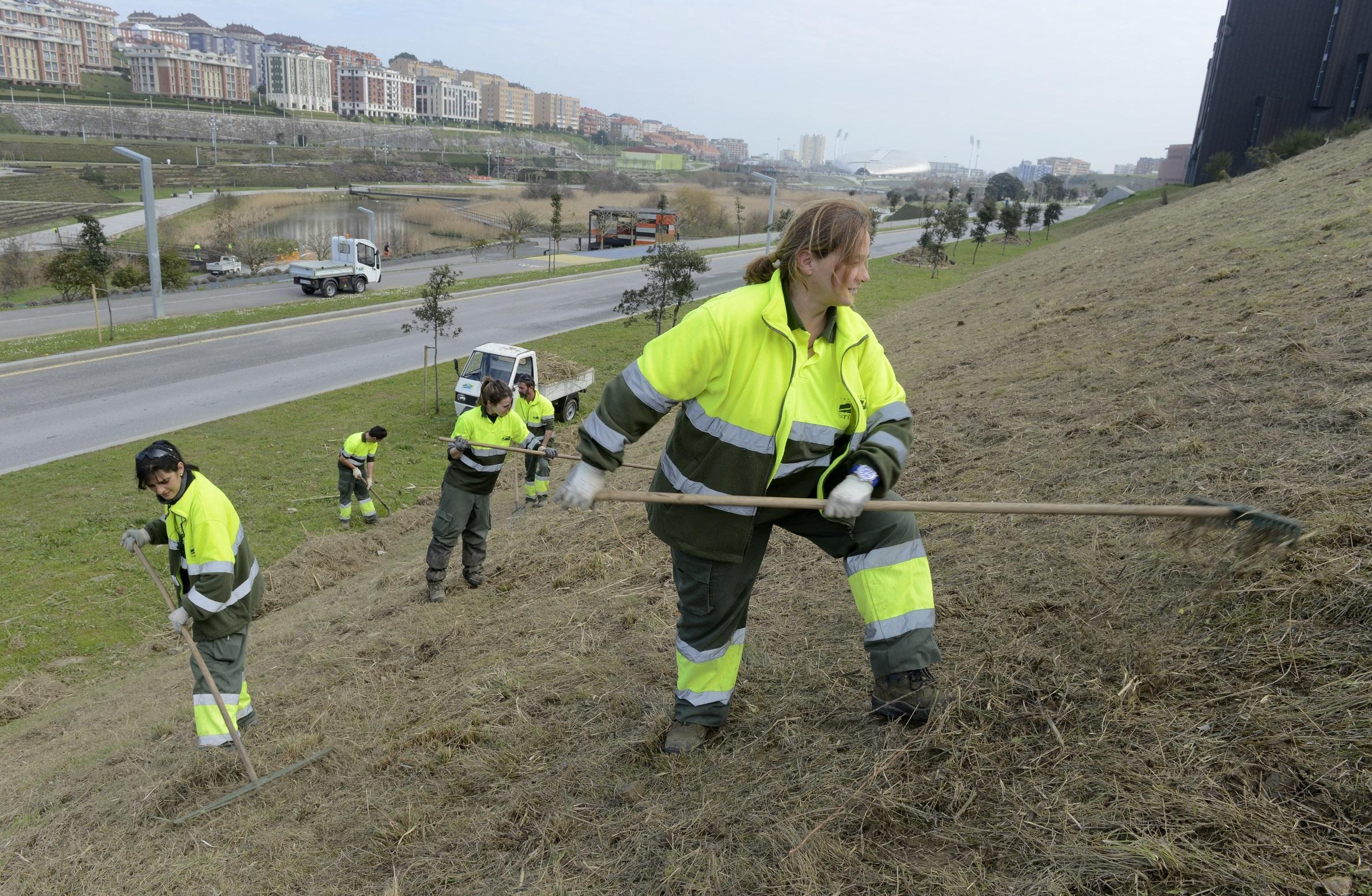 Ayuntamiento realizará una nueva actuación contra especies invasoras en Cabo Mayor y en el Parque de Ciriego