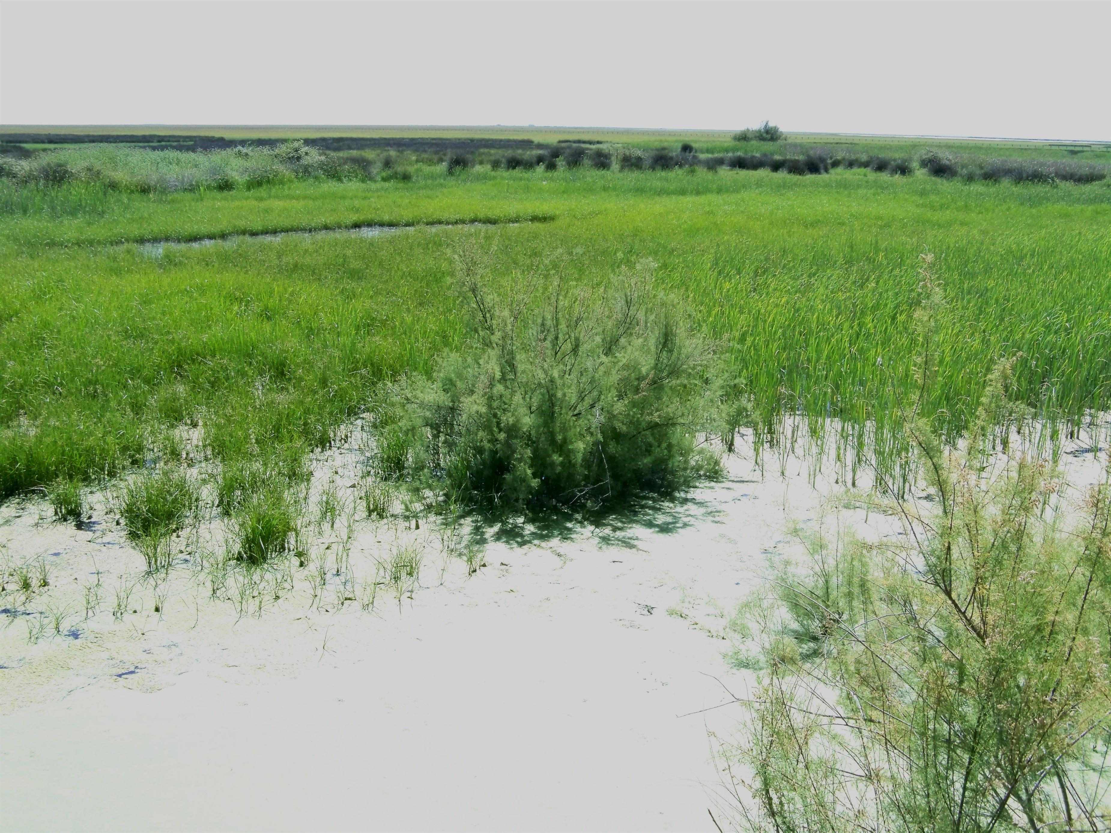 La agenda provisional de la Unesco contempla debatir el estado de conservación de Doñana a partir del 19 de junio