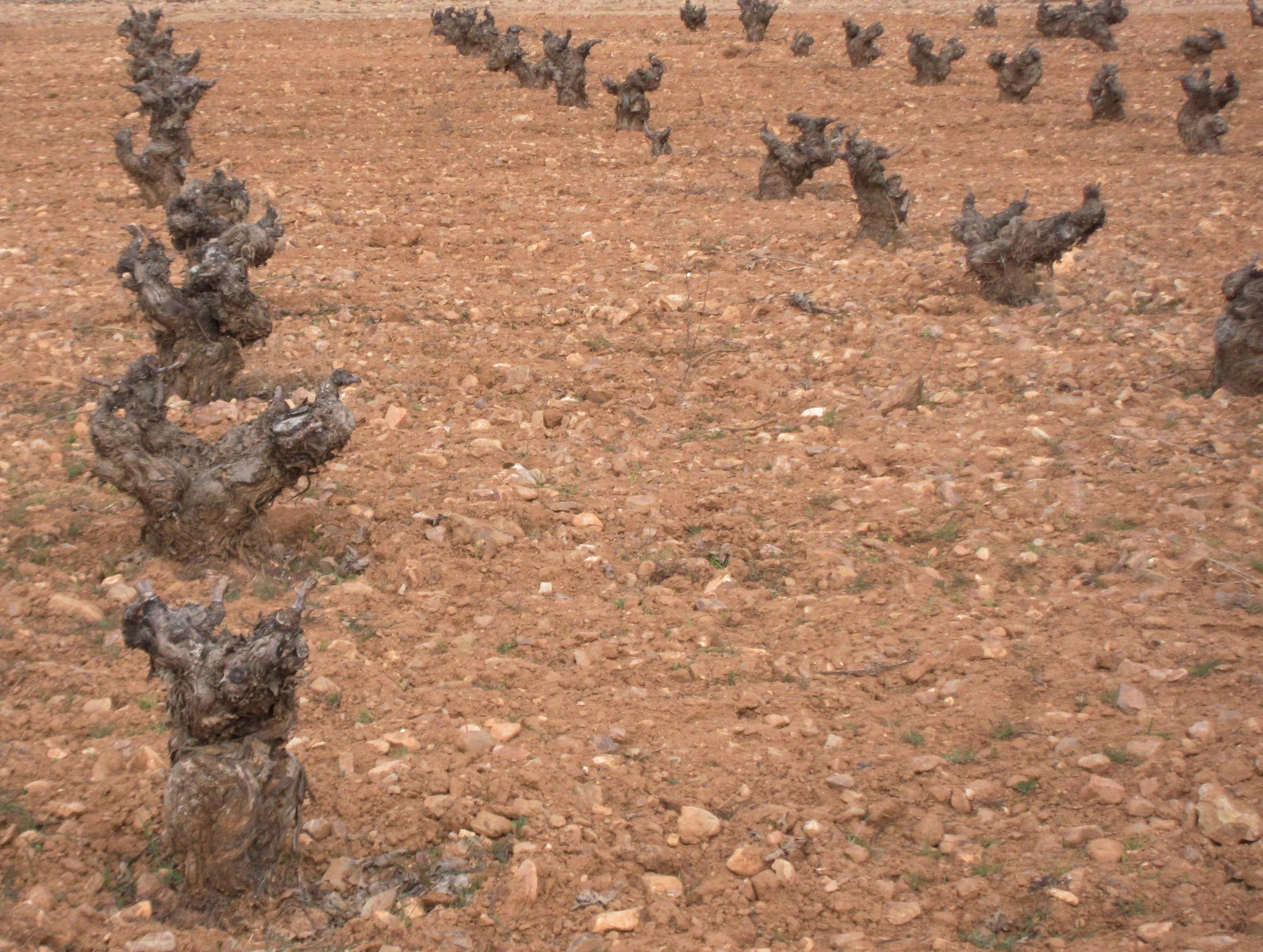 El Comité de Seguimiento del Plan de Desarrollo Rural de la Comunitat acuerda prorrogar las ayudas agroambientales