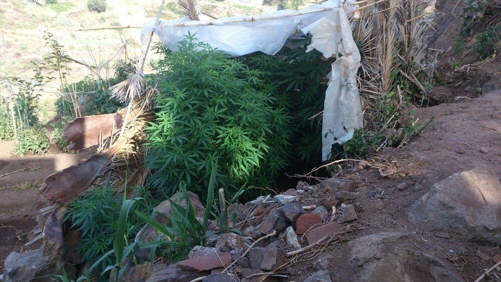 Detenido por cultivar marihuana en una huerta del Obispado en Taganana (Tenerife)