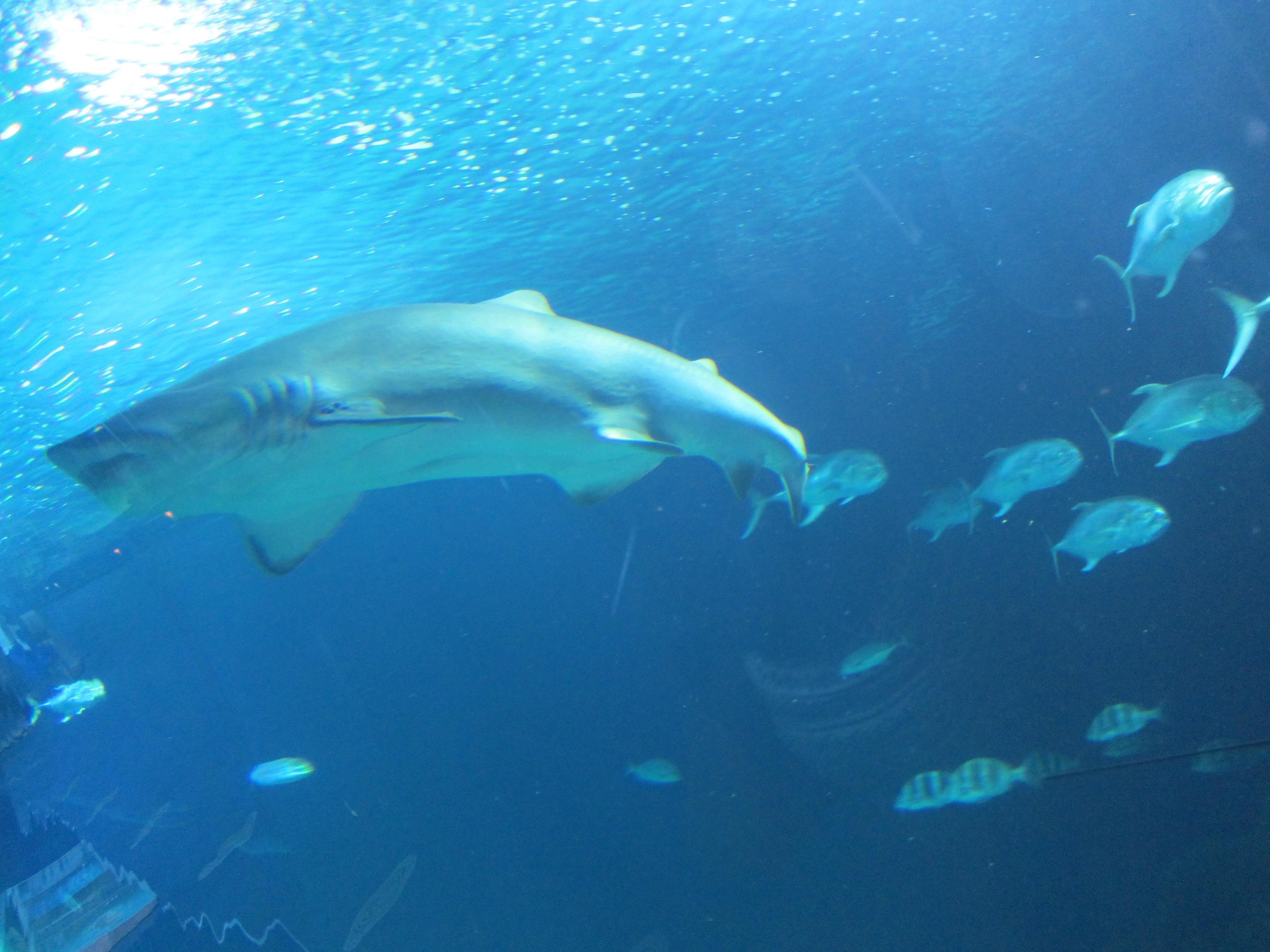 El Puerto de Vigo probará un método con imanes pionero en España para evitar la caza accidental de tiburones