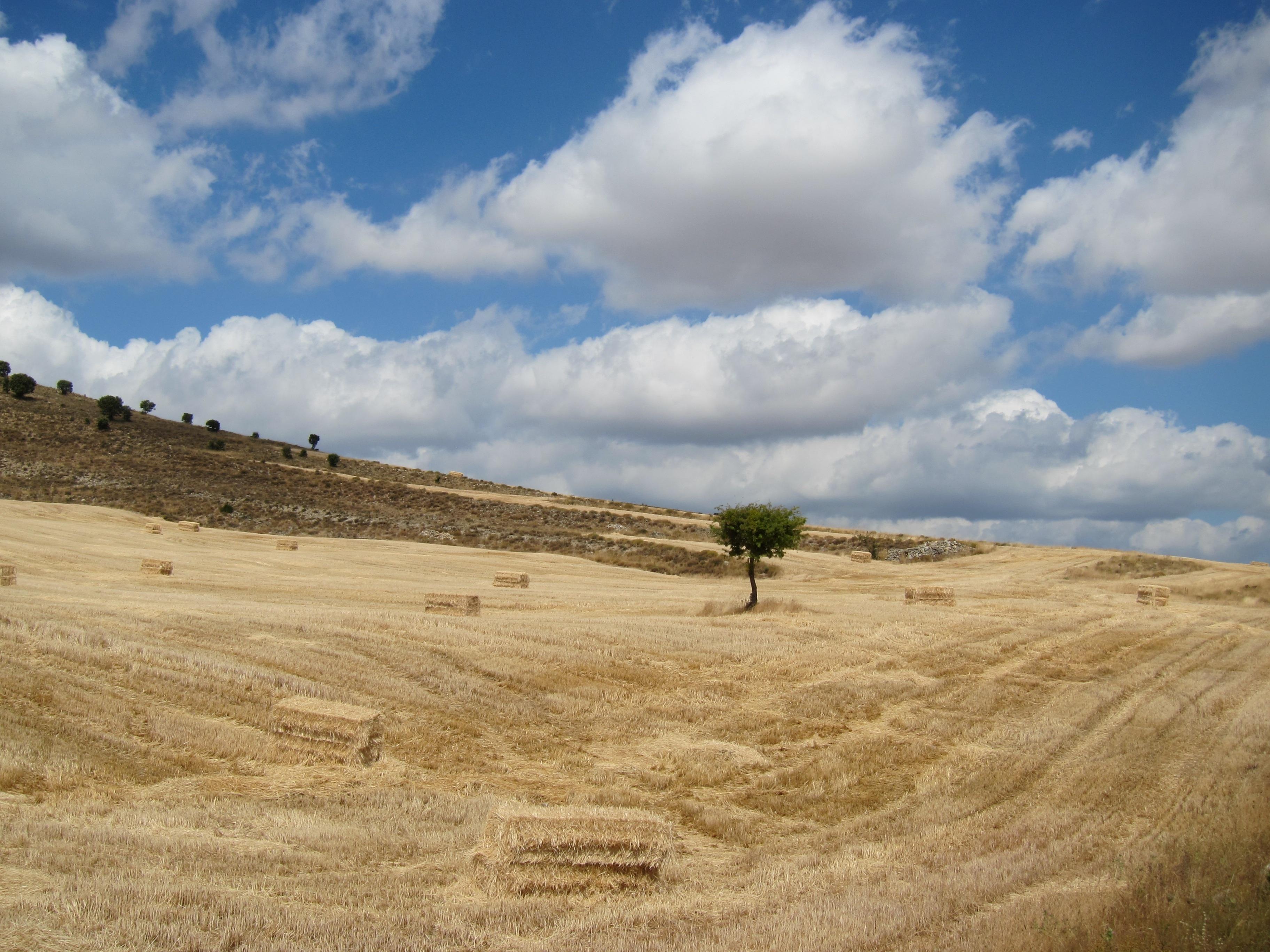 Agro-. El Estado y Catalunya colaborarán para controlar los campos con ayudas comunitarias