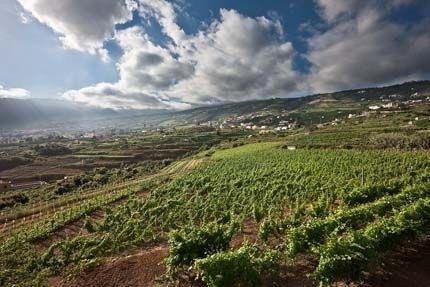 El Gobierno aprueba medidas al sector vitivinícola que fomentará la competitividad e internacionalización