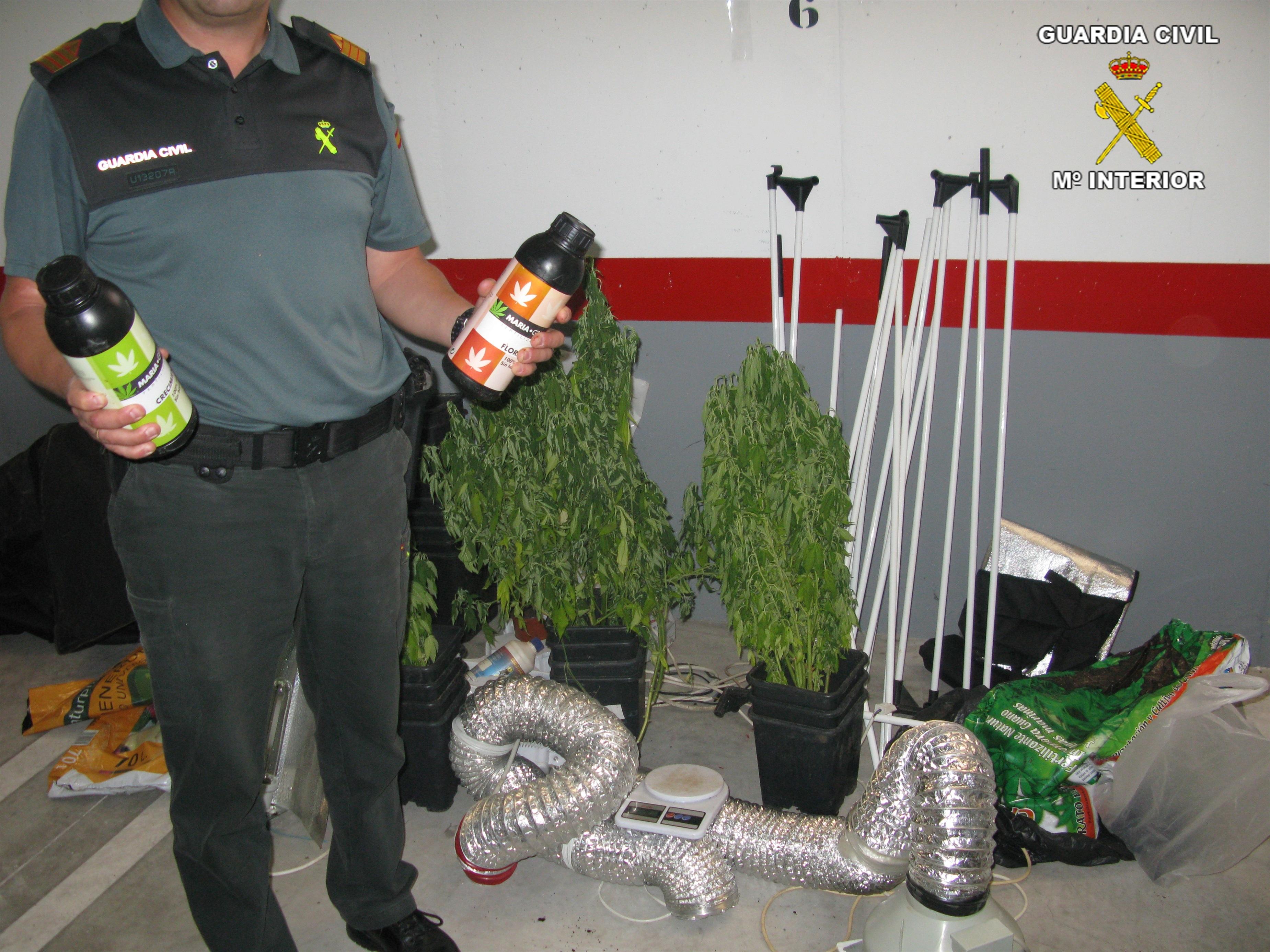 Guardia Civil desmantela en Baena un invernadero de marihuana con aire acondicionado y riego por goteo