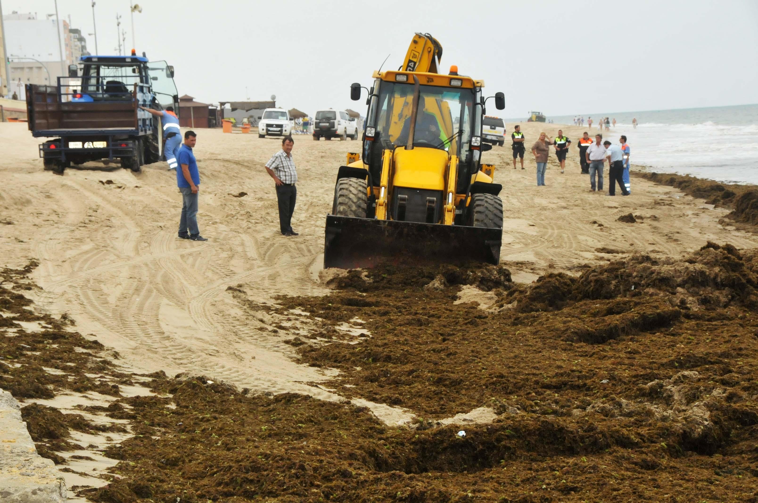 Retiran toneladas de algas acumuladas en las playas de la capital