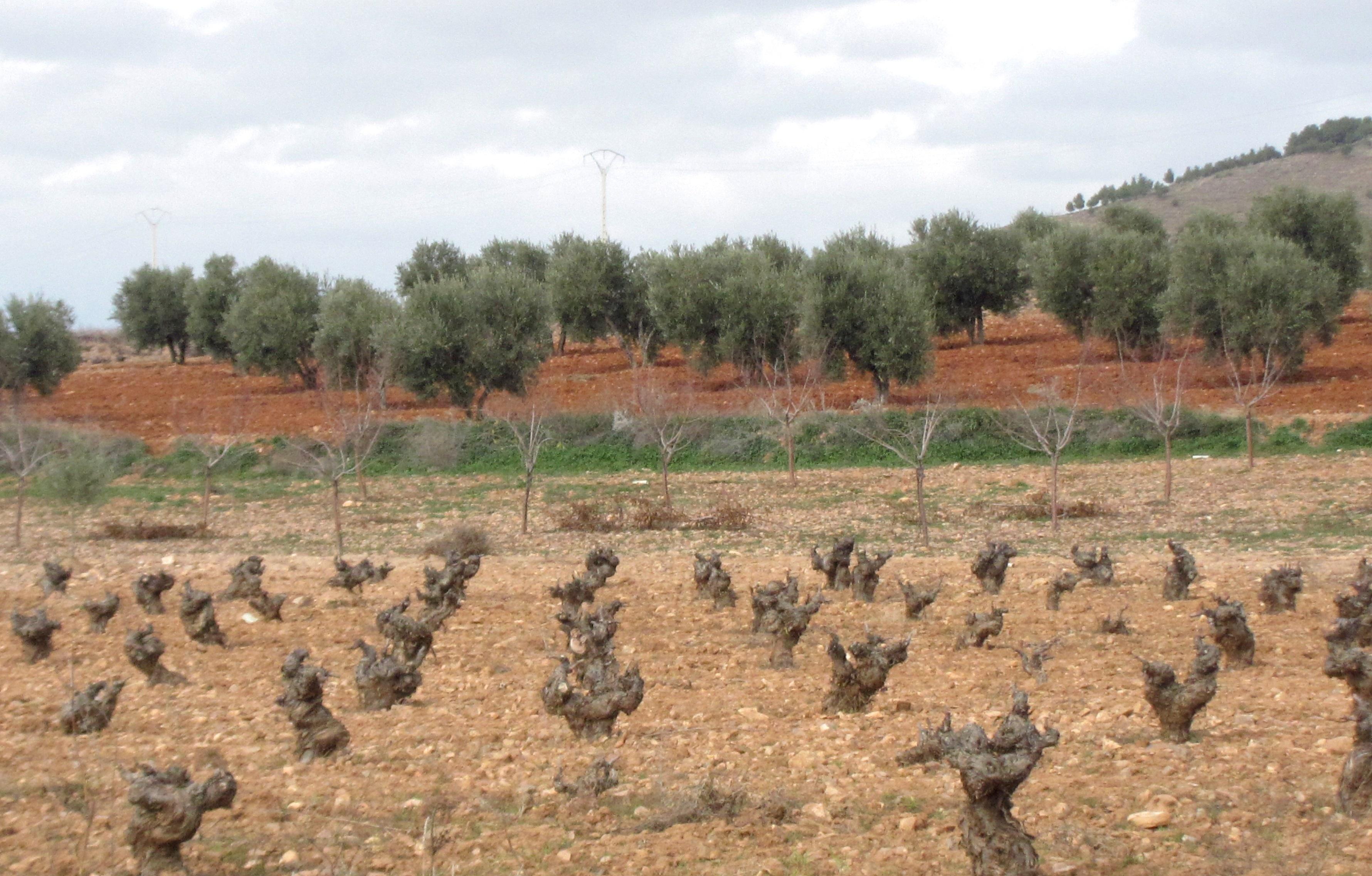 Agricultura reparte 6.000 hectáreas de viñedo al sector procedentes de la Reserva Regional