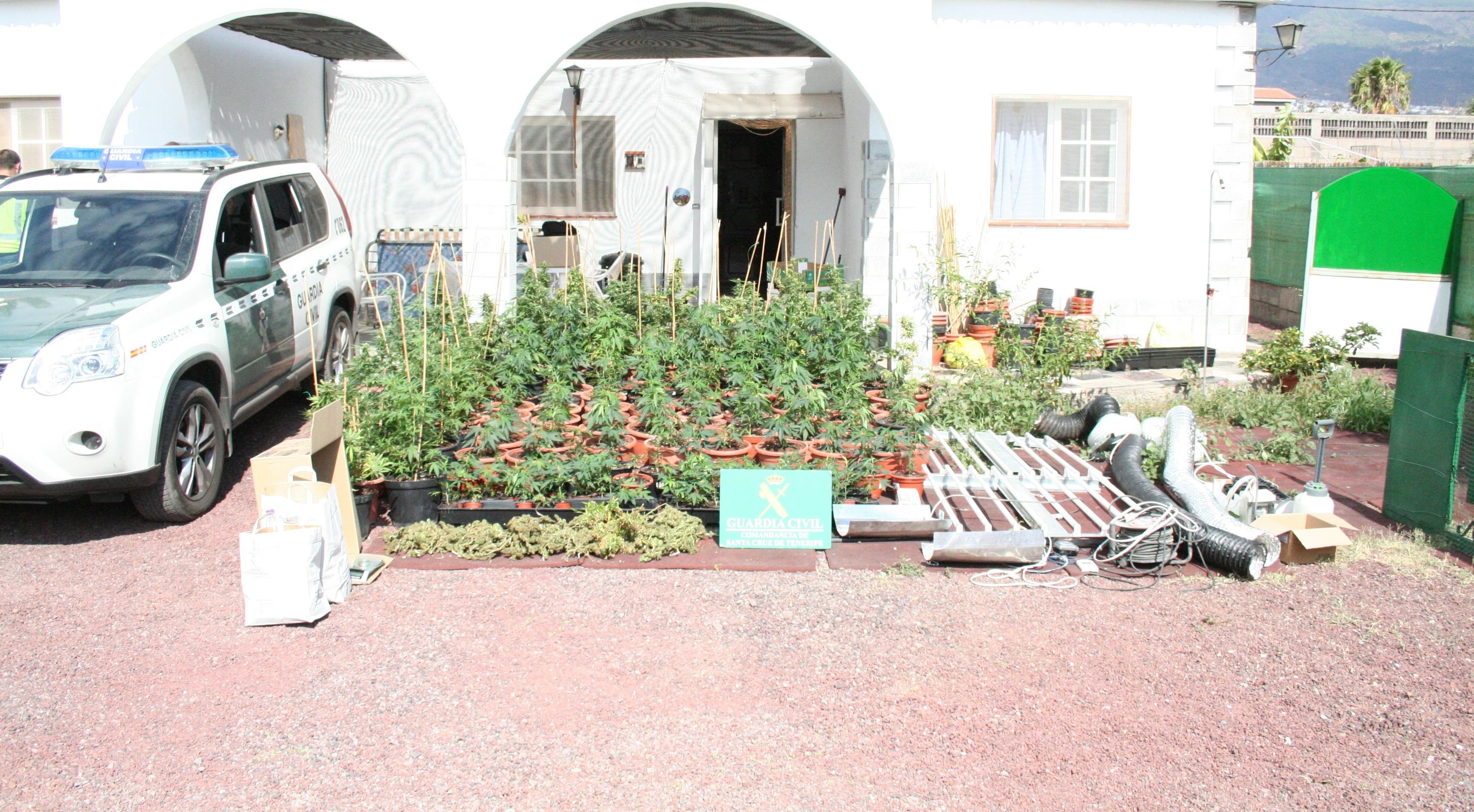 Desmantelan un laboratorio con 184 plantas de marihuana en Güímar (Tenerife)