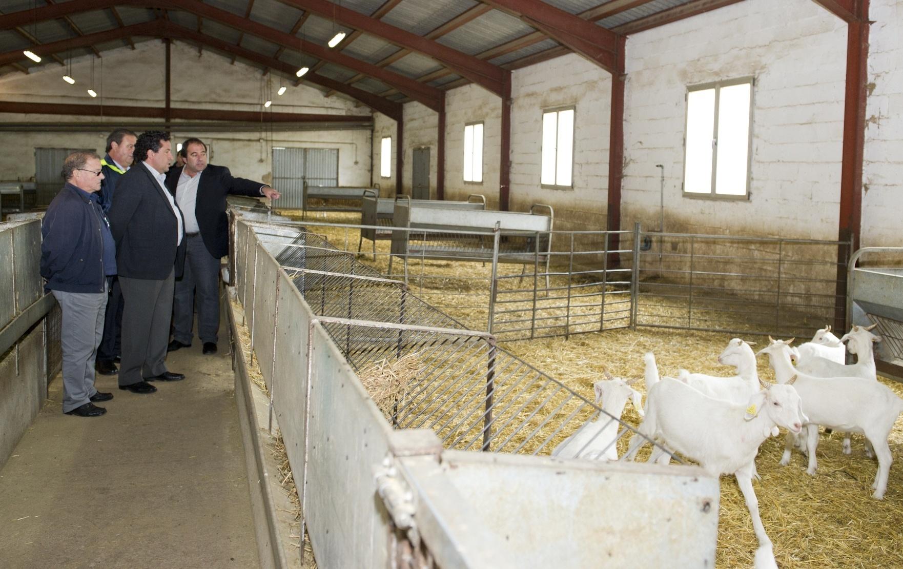La Diputación impulsa la Feria Ganadera de Morella con 6.000 euros y la cesión de 22 animales