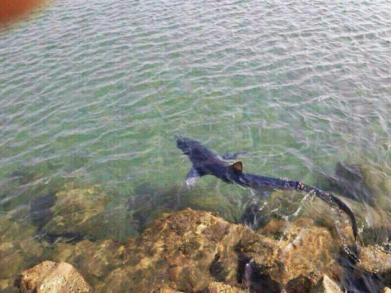 La playa gaditana de San Roque recobra la calma tras la alerta por un tiburón