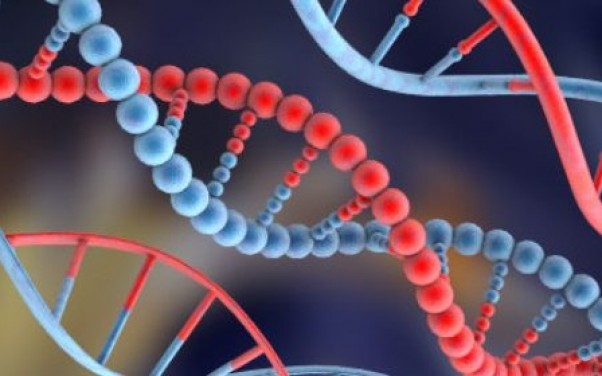 Publican por primera vez un mapa con las diferencias genéticas entre individuos