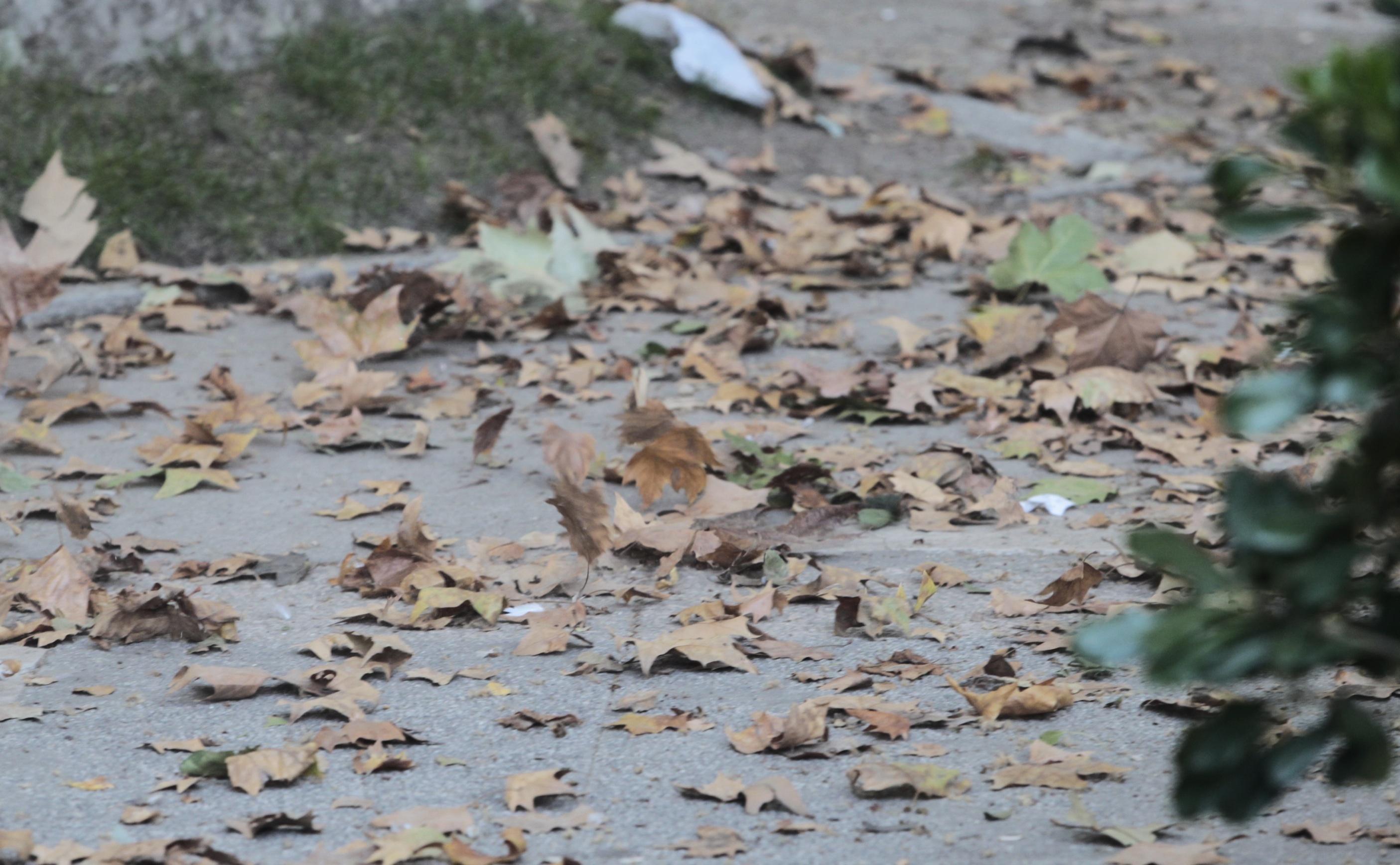 Las cabañuelas predicen un otoño poco lluvioso y más bien tormentoso