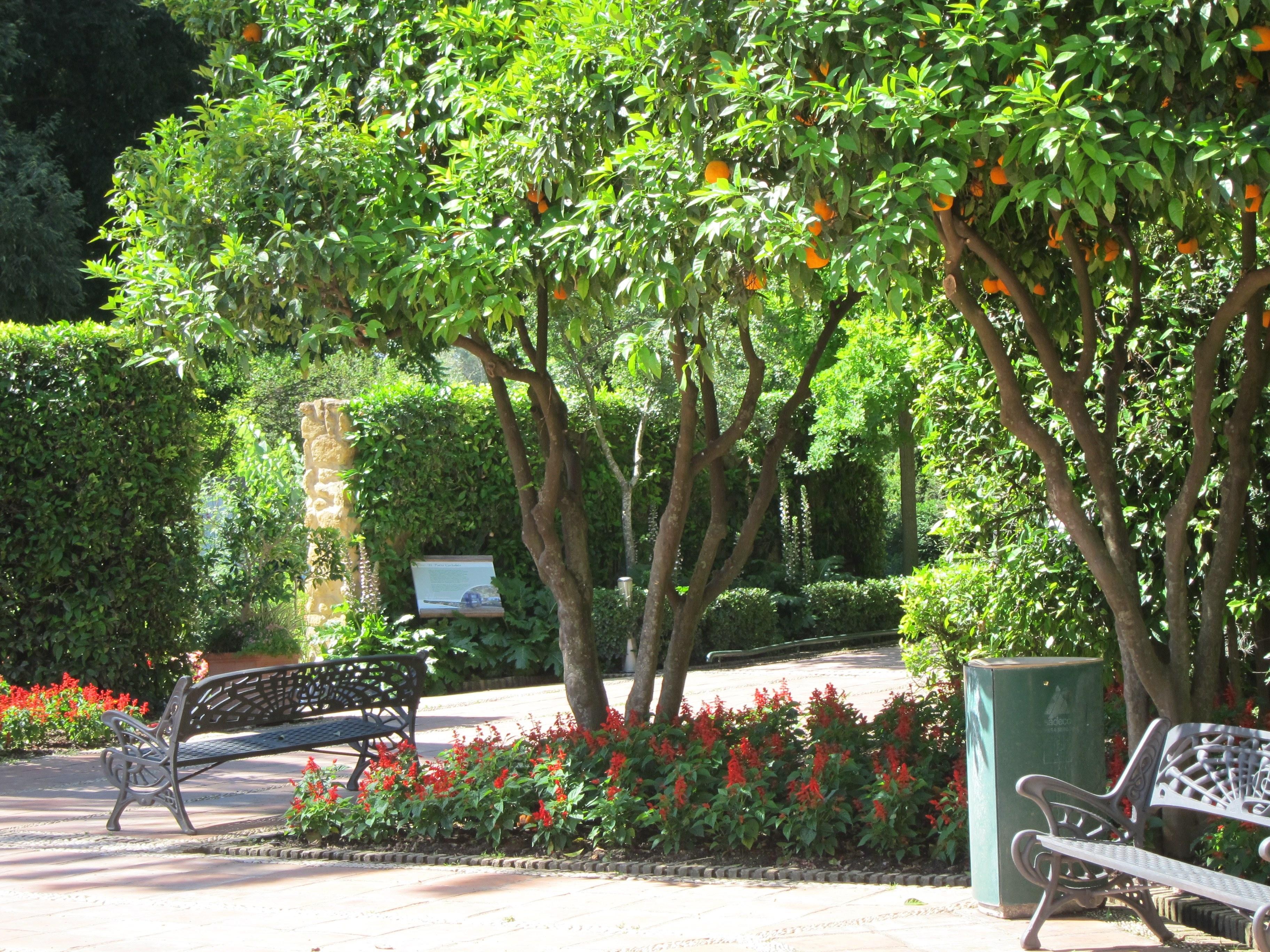 El Jardín Botánico participará en la »Noche de los Investigadores» con sus estudios sobre plantas amenazadas