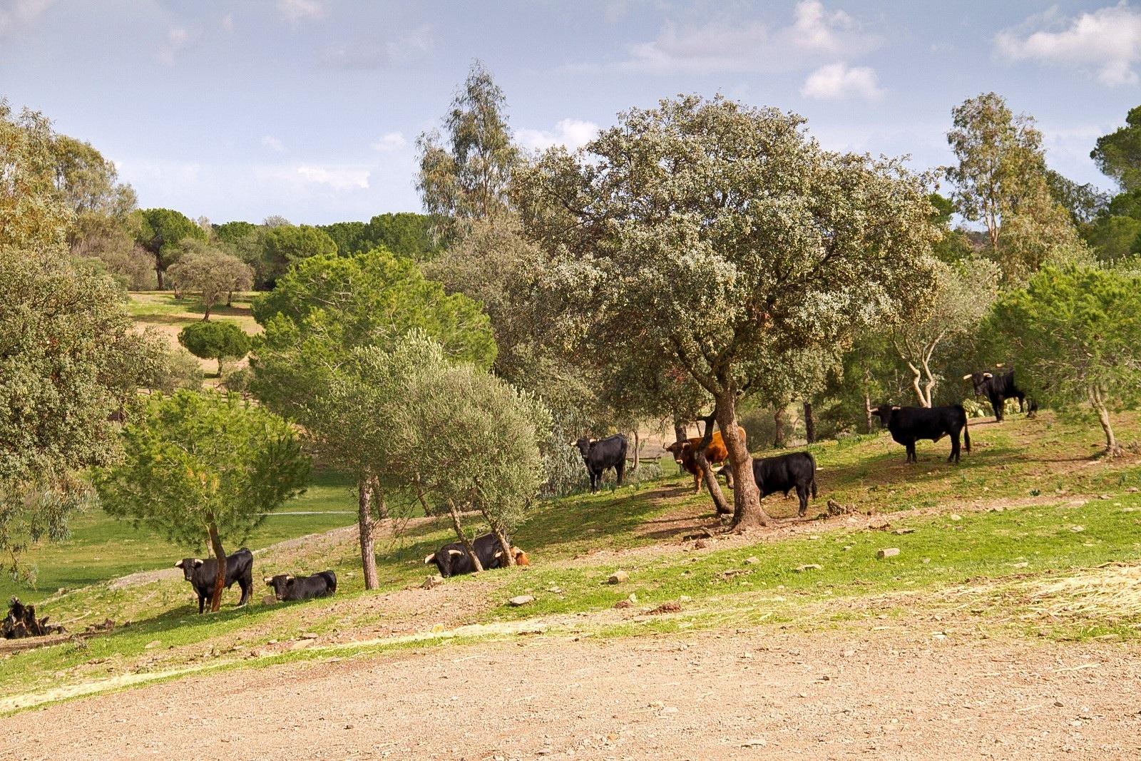 Huelva presenta la cría del toro bravo como reclamo turístico en la feria »Tierra Adentro»