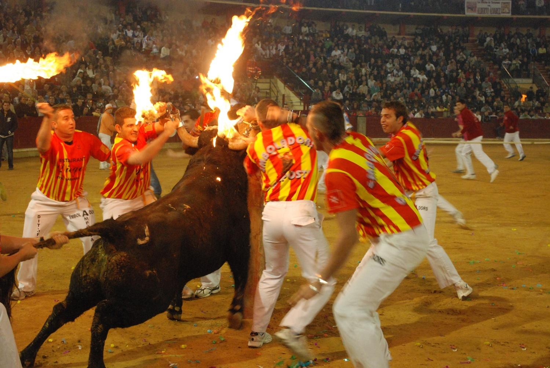 Parlamentarios Animalistas alertan de que declarar al toro »bien de interés cultural» será un desprestigio para España
