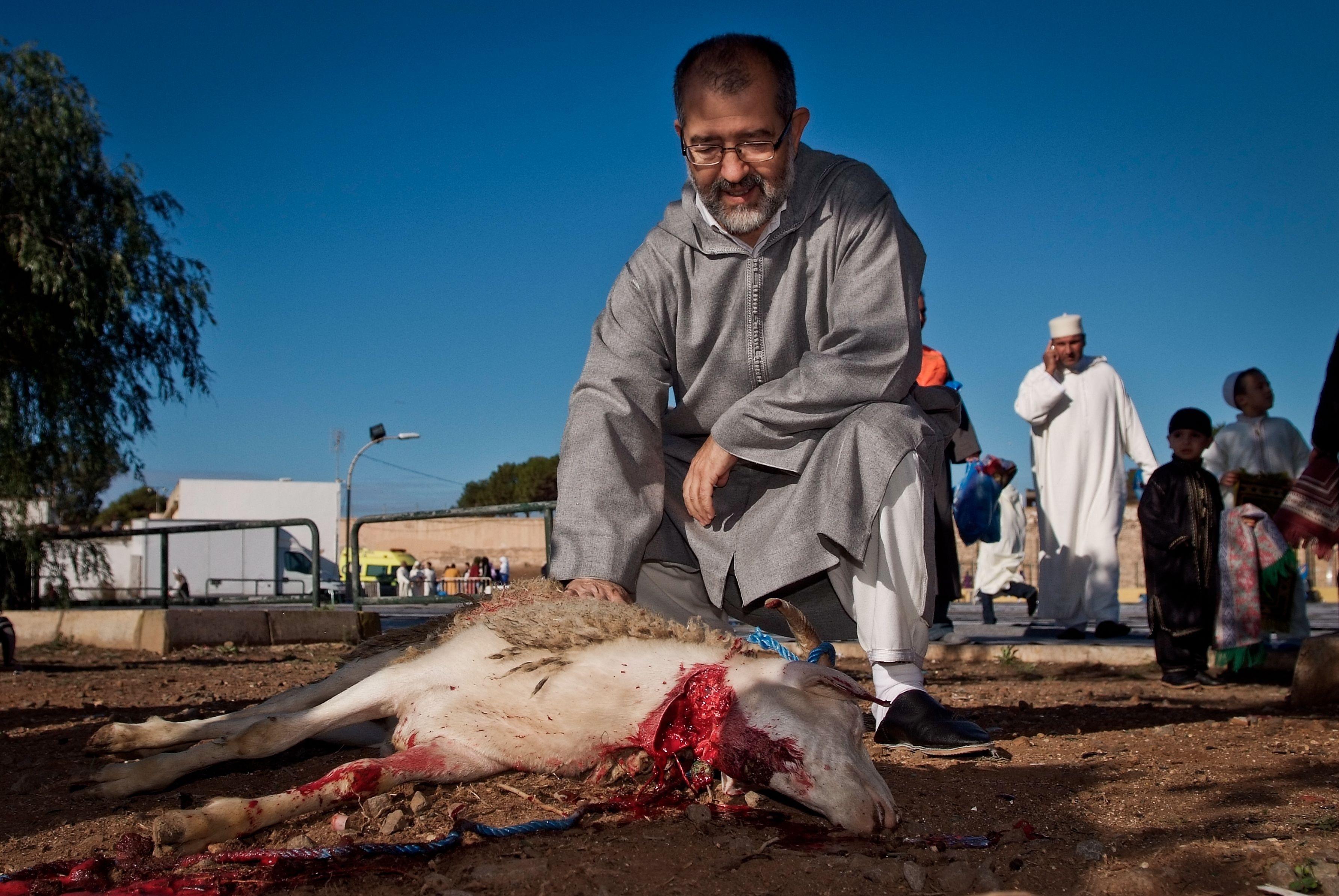 Igualdad Animal rechaza la fiesta del cordero en la que se degollan ovejas en presencia de niños por motivos religiosos