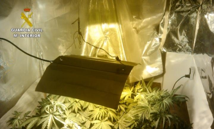 La Guardia Civil desmantela una plantación de marihuana con secadero en Aldeamayor de San Martín (Valladolid)
