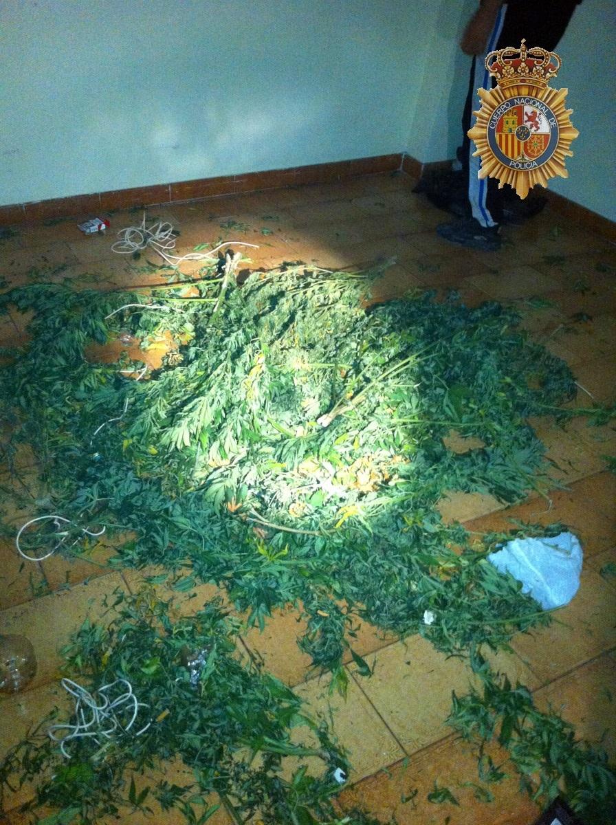 Cinco detenidos en Almenar y Alfarràs por cultivar marihuana en fincas y viviendas