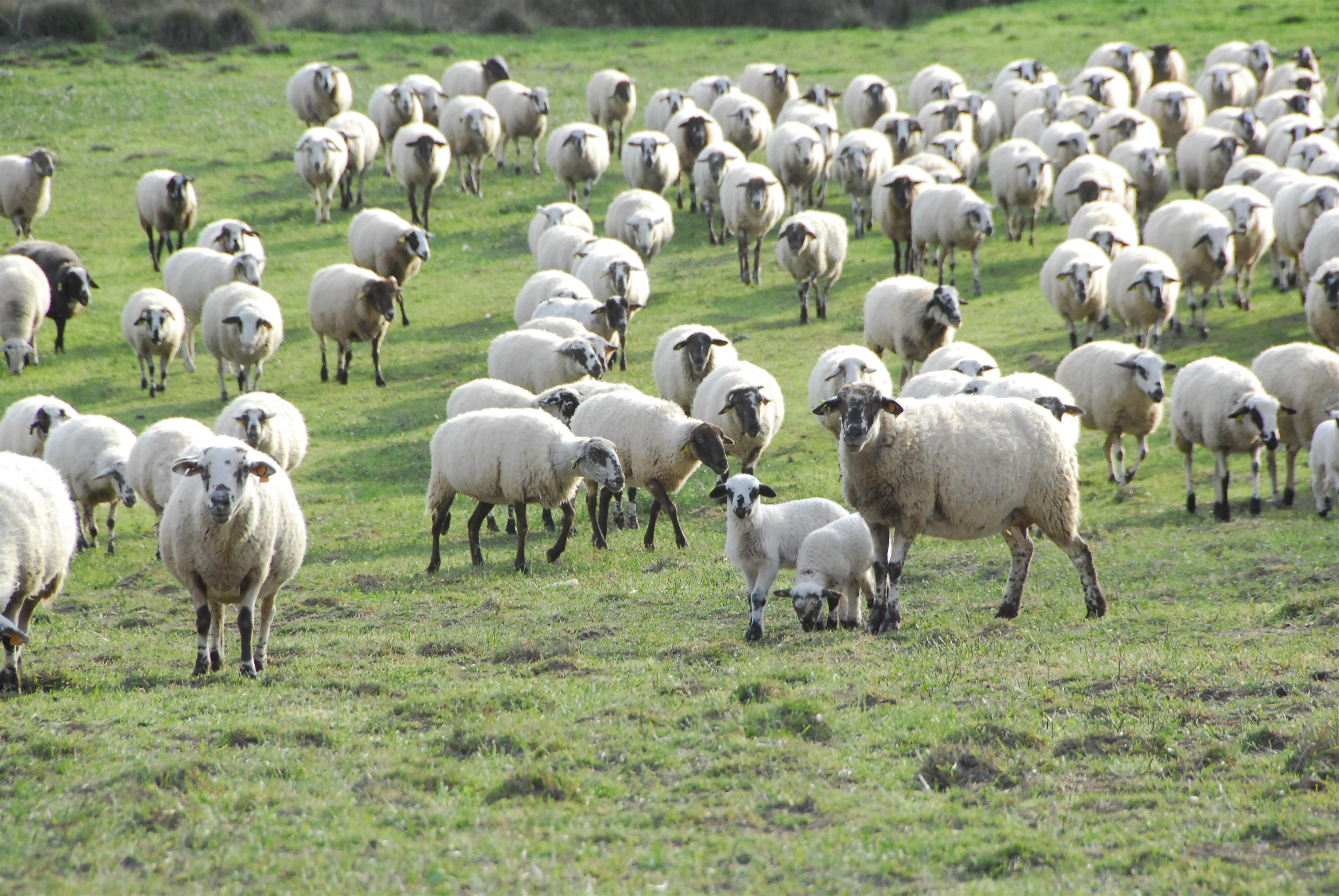 La Rioja recibirá 282.451 euros para la ejecución de programas de agricultura y ganadería