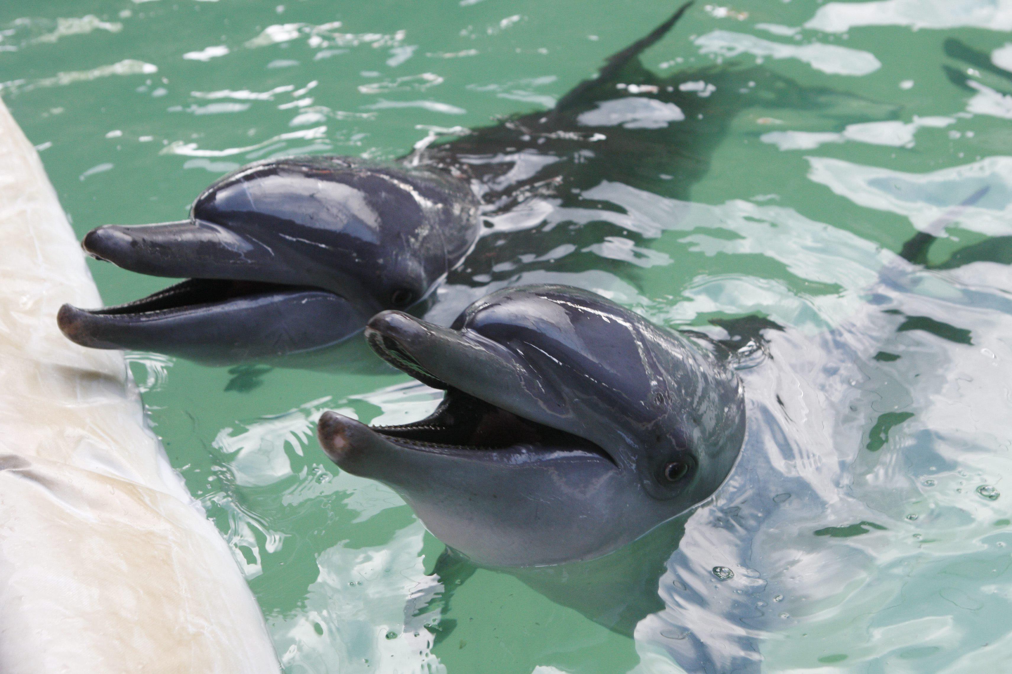 Unos 15.000 delfines mueren al año a manos de pescadores artesanales
