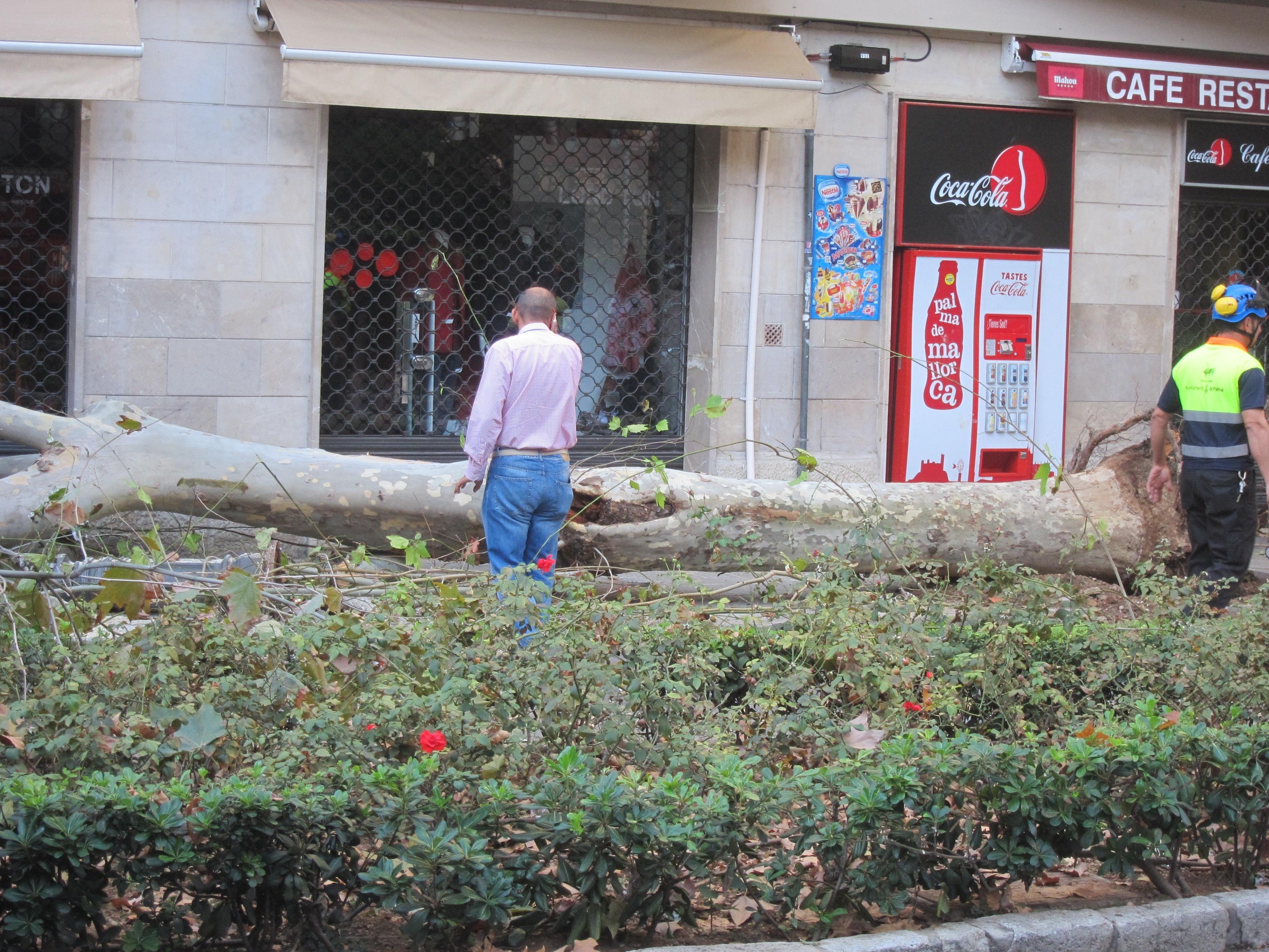 Un camión de Emaya embiste a un árbol platanero y tres farolas en las Ramblas de Palma